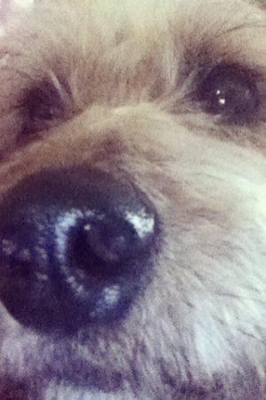 Meg Dog