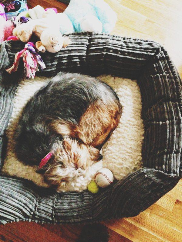 Jan-30-Dog-Bed