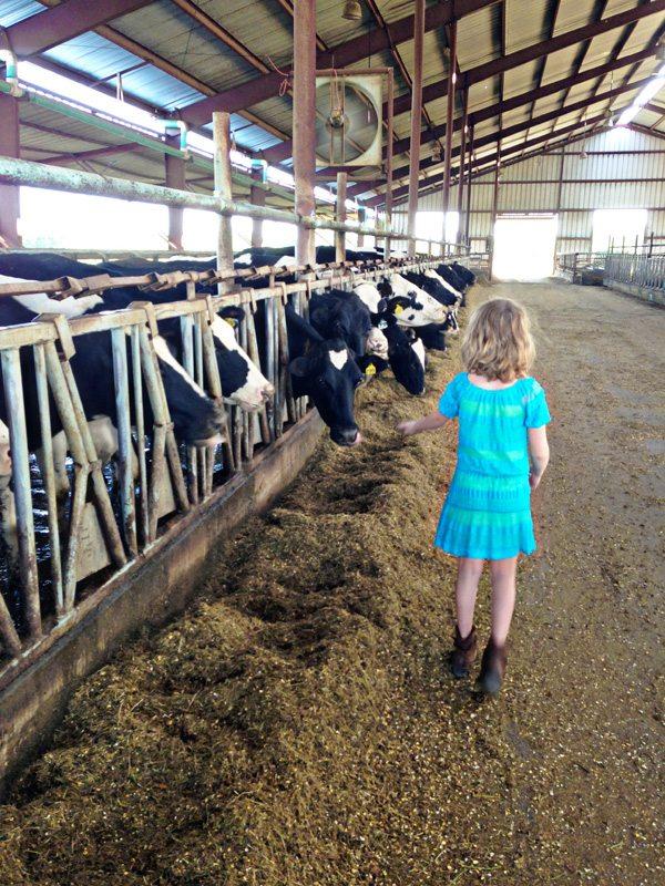 Ella-touching-cows