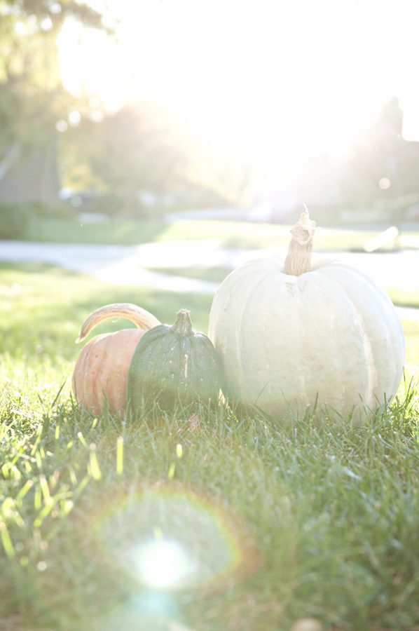 October 26th Pumpkins and flare