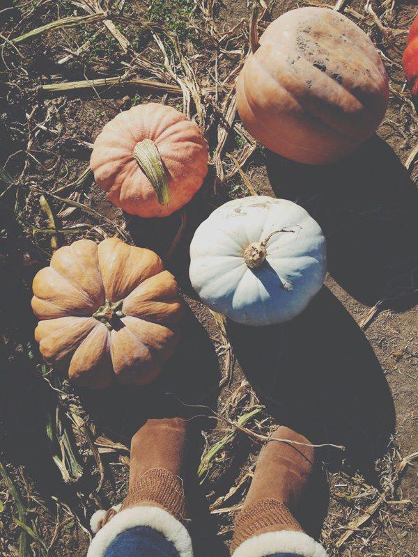 October-23-Pumpkin-Patch