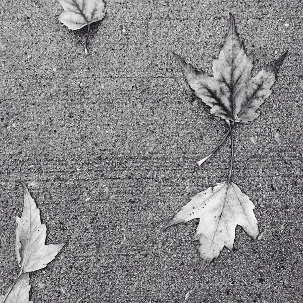 October 29th Black and White Leaves