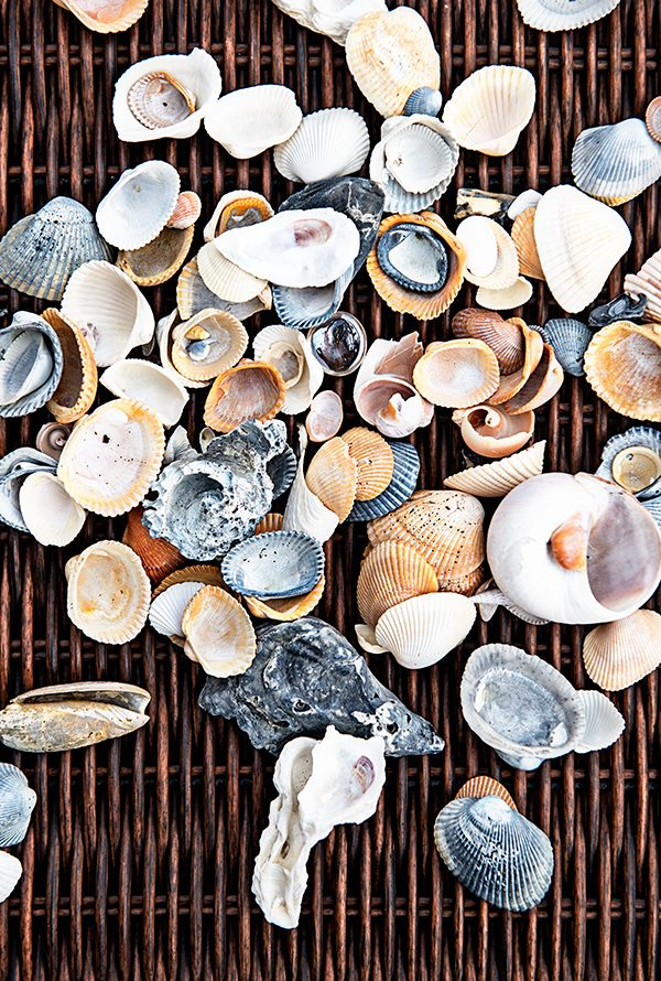 January 11 Seashells from Tybee Island